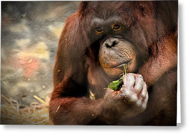 Orangutan Photographs Greeting Cards - Pondering Greeting Card by Mark Papke