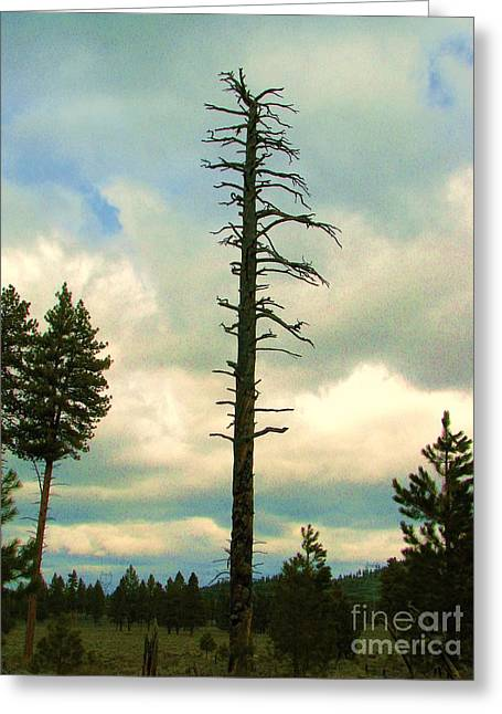 Ponderosa Pine Snag Greeting Card by Michele Penner