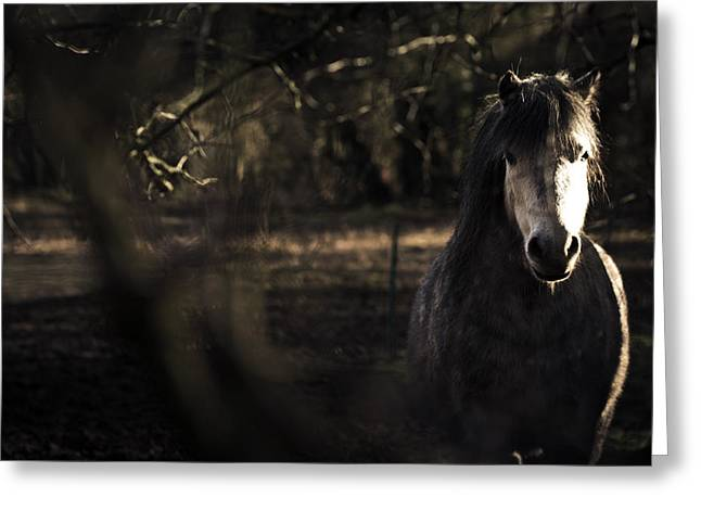 Pony Greeting Cards - Pony in the Brambles Greeting Card by Justin Albrecht