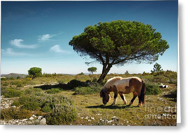 Spring Scenes Greeting Cards - Pony Pasturing Greeting Card by Carlos Caetano
