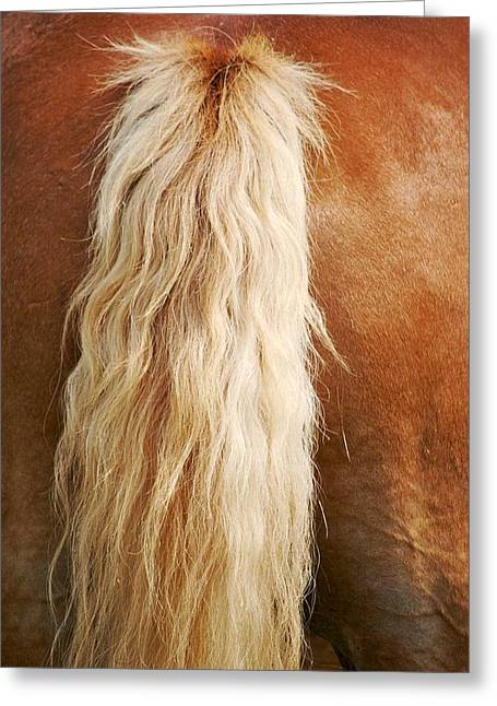 Animals Glass Art Greeting Cards - Pony Tail Greeting Card by Donna Shahan