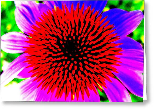 Abstracted Coneflowers Greeting Cards - Pop Art Coneflower Greeting Card by Beth Akerman