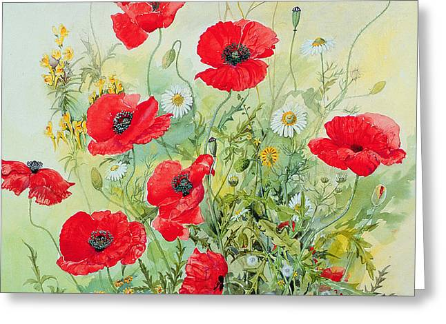 Poppies and Mayweed Greeting Card by John Gubbins