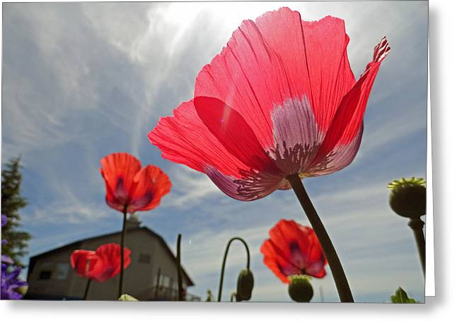 Poppies And Sky Greeting Card by Robert Meyers-Lussier