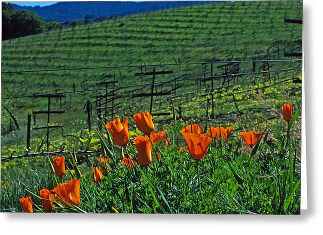 Vineyard Prints Greeting Cards - Poppies and the Vineyard Greeting Card by Kathy Yates