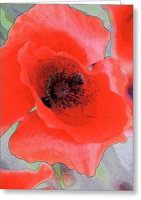 Edmonton Photographer Greeting Cards - Poppies Bloom Greeting Card by Jerry Cordeiro