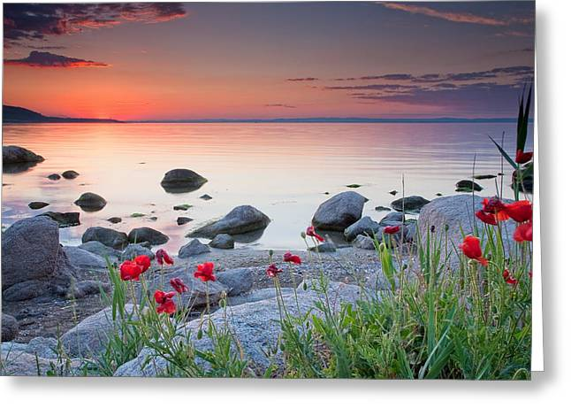 Sea Flower Greeting Cards - Poppies By the Sea Greeting Card by Evgeni Dinev