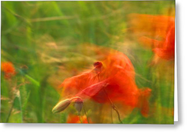Moving Petals Greeting Cards - Poppies dancing in the wind Greeting Card by Intensivelight