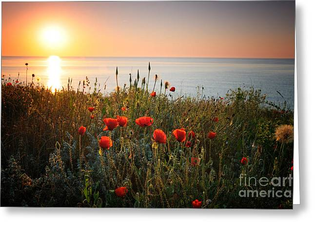 Poppies In The Sunrise Greeting Card by Ionut Hrenciuc