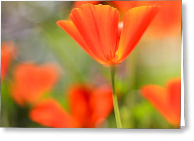 Poppies In The Wind Greeting Card by Heidi Smith