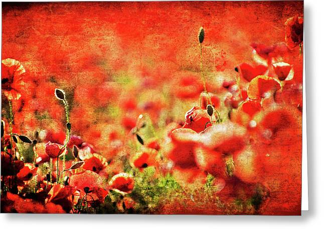 Bristle Greeting Cards - Poppies Greeting Card by Meirion Matthias