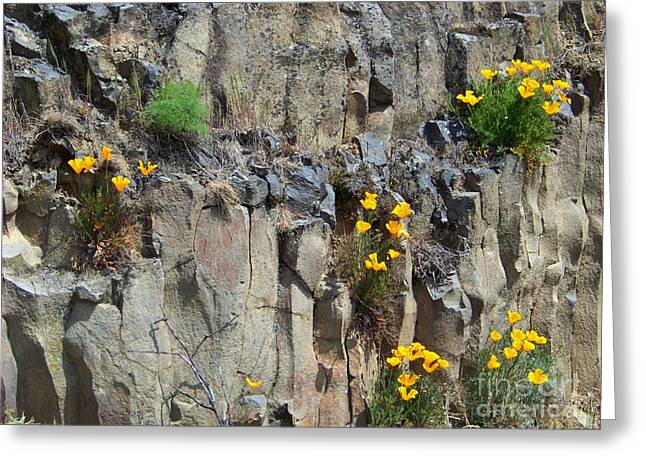 Wildfowers Greeting Cards - Poppies on the Cliff Greeting Card by Charles Robinson