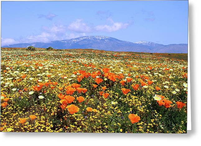 Poppies Over The Mountain Greeting Card by Peter Tellone