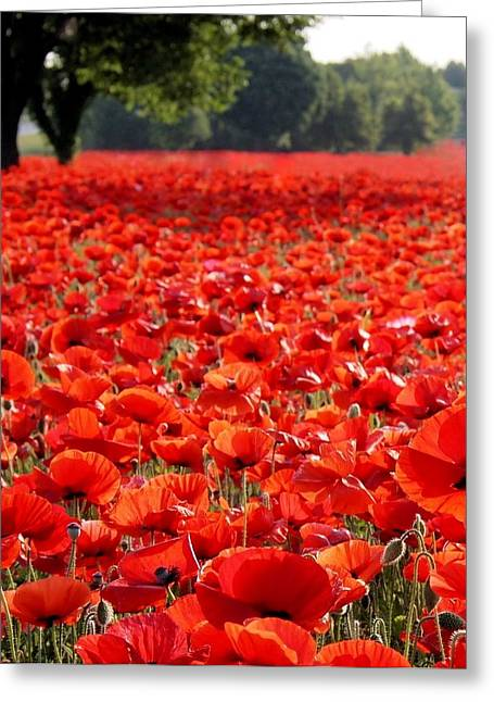 Gaston County Photographs Greeting Cards - Poppies  Greeting Card by Tammy Cantrell