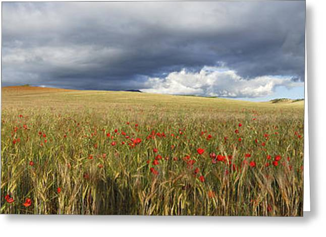 Panoramics Greeting Cards - Poppies under the clouds Greeting Card by Guido Montanes Castillo