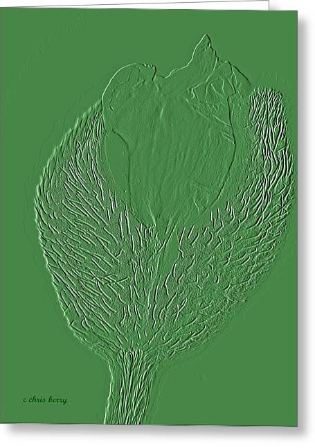 Embossed Greeting Cards - Poppy Embossing  Greeting Card by Chris Berry