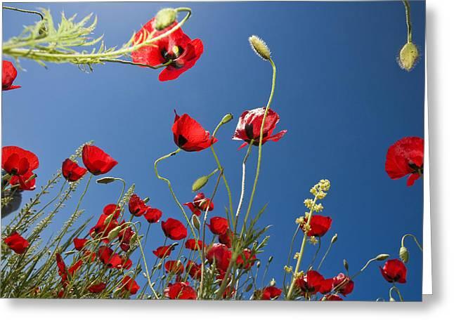 Poppy Field Greeting Card by Ayhan Altun