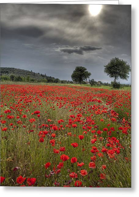 Hilltown Greeting Cards - Poppy field in Tuscany Greeting Card by Al Hurley