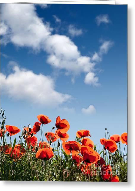 Botanicals Greeting Cards - Poppy Flowers 04 Greeting Card by Nailia Schwarz