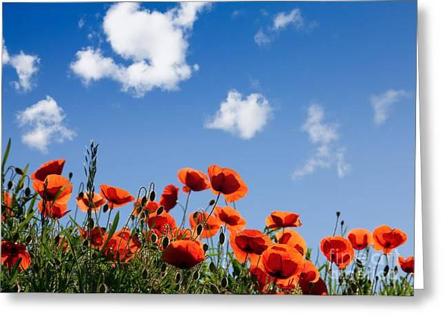 Botanicals Greeting Cards - Poppy Flowers 05 Greeting Card by Nailia Schwarz