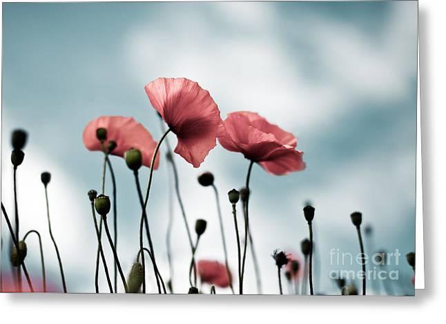 Poppy Flowers 07 Greeting Card by Nailia Schwarz
