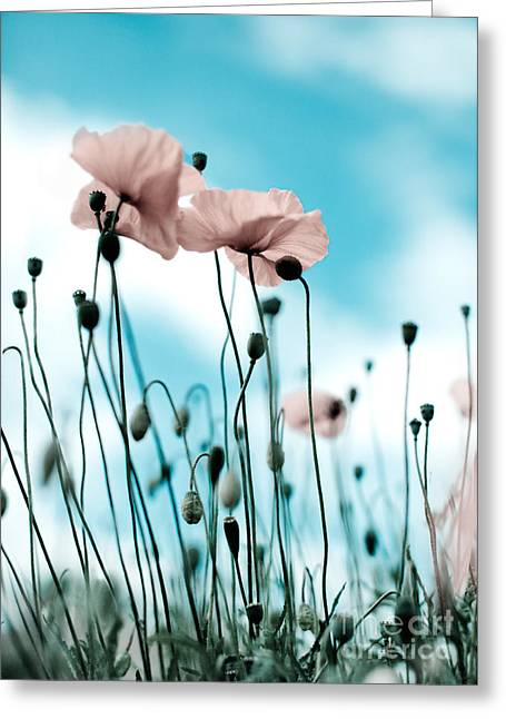 Blossoming Greeting Cards - Poppy Flowers 09 Greeting Card by Nailia Schwarz