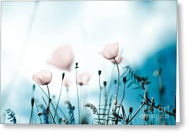 Botanicals Greeting Cards - Poppy Flowers 11 Greeting Card by Nailia Schwarz