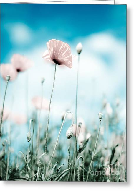 Botanicals Greeting Cards - Poppy Flowers 13 Greeting Card by Nailia Schwarz