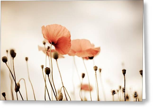 Poppy Flowers 14 Greeting Card by Nailia Schwarz