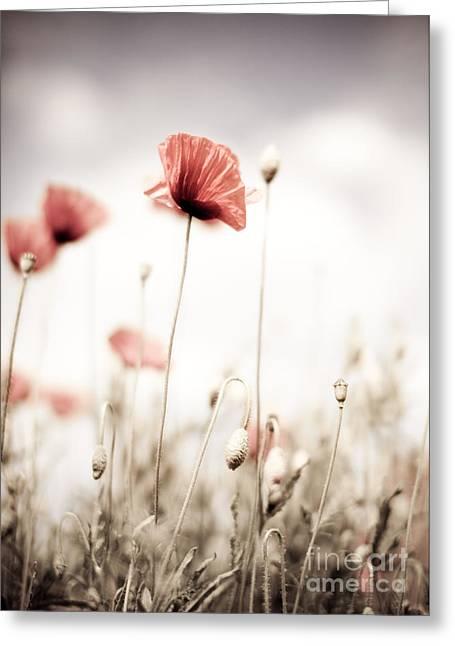 Botanicals Greeting Cards - Poppy Flowers 15 Greeting Card by Nailia Schwarz
