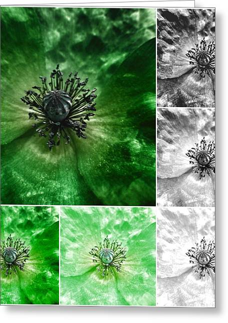 Mills Greeting Cards - Poppy Green - Macro Flowers Fine Art Photography Greeting Card by Marianna Mills