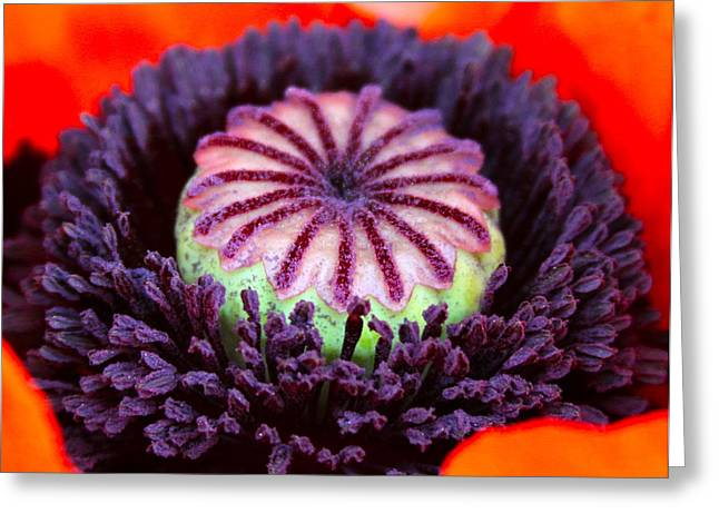 Stigma Greeting Cards - Poppy Heart Greeting Card by Karon Melillo DeVega