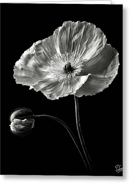 Flower Photos Greeting Cards - Poppy in Black and White Greeting Card by Endre Balogh