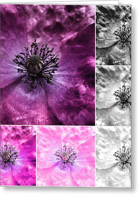 Lilac Greeting Cards - Poppy Purple - Macro Flowers Fine Art Photography Greeting Card by Marianna Mills