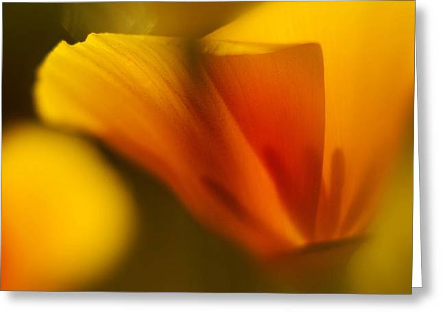 Poppy Greeting Card by Ralph Vazquez