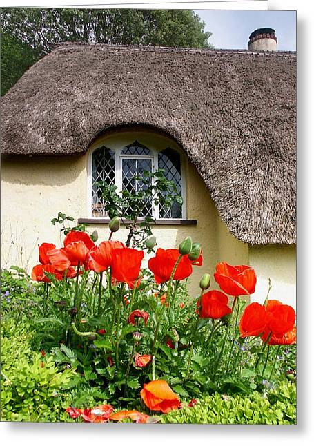 Selworthy Greeting Cards - Poppy view Greeting Card by Ed Lukas