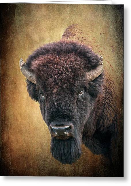 Tamyra Ayles Greeting Cards - Portrait of a Buffalo Greeting Card by Tamyra Ayles