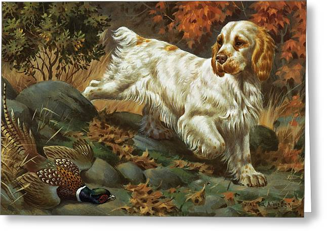 Spaniel Greeting Cards - Portrait Of A Clumber Spaniel Hunting Greeting Card by Walter A. Weber
