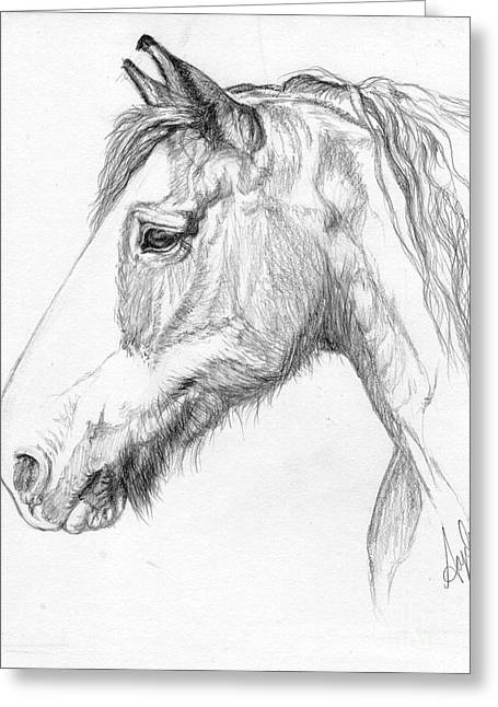 Equine Greeting Cards - Portrait of a Clydesdale Greeting Card by Angela Marks