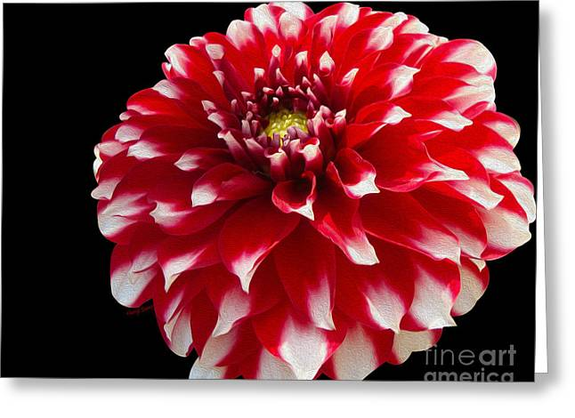 Reception Greeting Cards - Portrait of a Dahlia Greeting Card by Cheryl Young