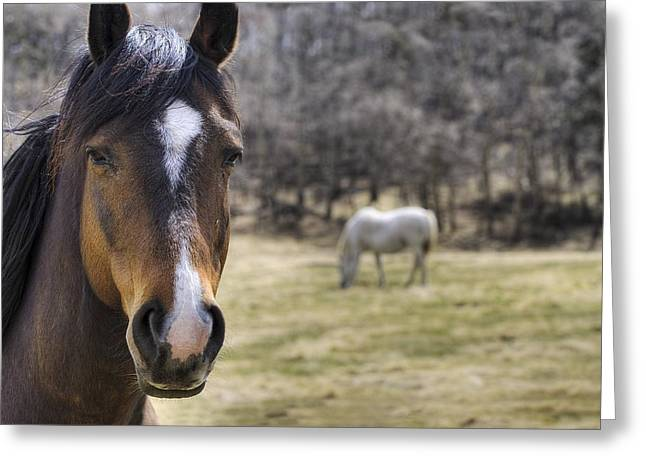 Canadian Prairies Greeting Cards - Portrait Of A Horse Greeting Card by Philippe Widling