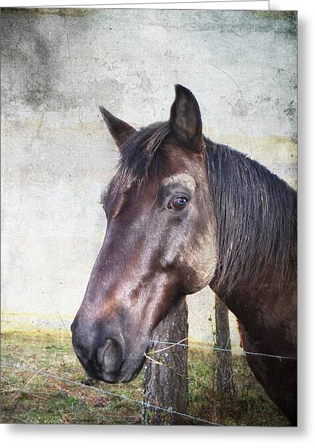 Portrait Of A Horse Series V Greeting Card by Kathy Jennings