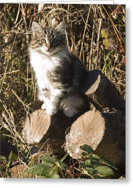 Cute Kitten Greeting Cards - Portrait Of A Kitten Atop A Pile Greeting Card by Rich Reid