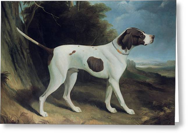 Hound Hounds Greeting Cards - Portrait of a liver and white pointer Greeting Card by George Garrard