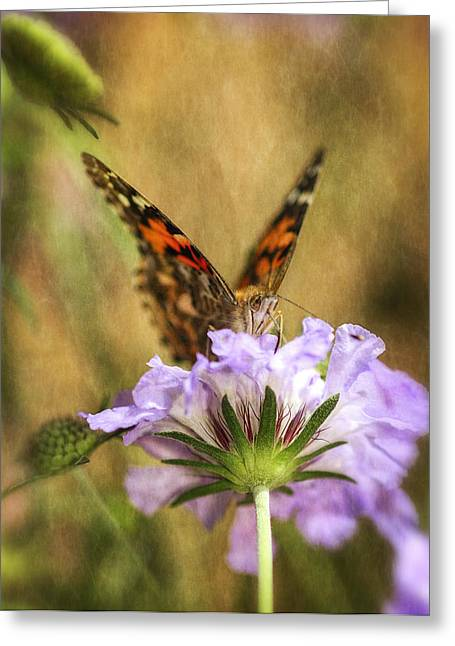 Painted Lady Butterflies Greeting Cards - Portrait of a Painted Lady Greeting Card by Saija  Lehtonen