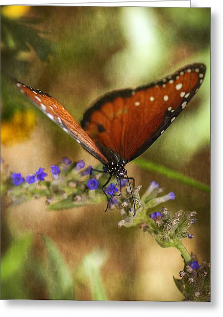 Queen Butterfly Greeting Cards - Portrait of a Queen  Greeting Card by Saija  Lehtonen