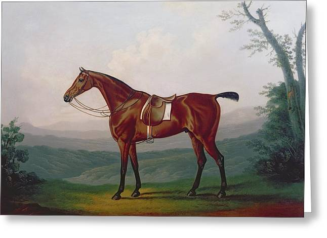 Daniel Paintings Greeting Cards - Portrait of a Race Horse Greeting Card by Daniel Clowes