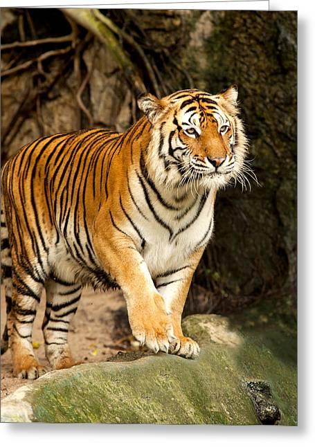 Tigris Greeting Cards - Portrait of a Royal Bengal tiger Greeting Card by Anek Suwannaphoom