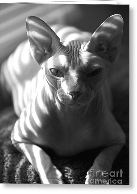 Sphynx Cat Greeting Cards - Portrait of a Sphynx Greeting Card by Glennis Siverson