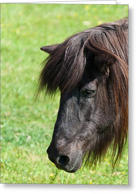 Dutch Greeting Cards - Portrait of an affectionate brown horse Greeting Card by Ruud Morijn
